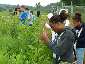 Students examining milkweed