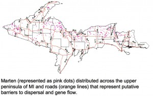 Map showing distribution of marten and roads that impede gene flow