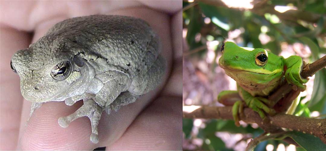 Evolution 101: Natural Selection   BEACON