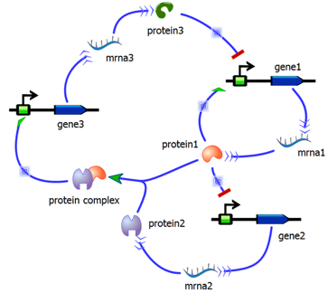 Synthetic Gene Circuit diagram