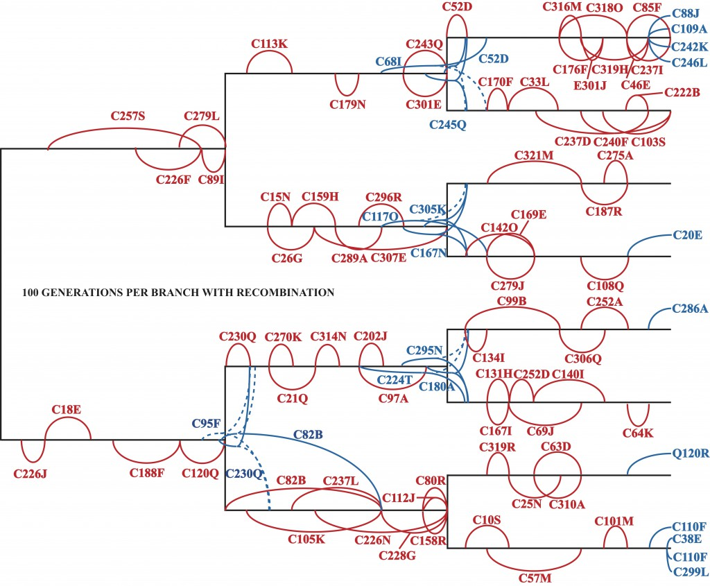 The known evolutionary relationships among eight Avida lineages evolved with recombination for 100 generations along each branch. Super-imposed along this phylogeny is the identity of every mutation that became fixed in the population, ie was eventually possessed by each member. In red are mutations that arose and became fixed along a single branch; in blue are those that became fixed on a subsequent branch, with a dashed line indicating a loss of the mutation in the sister population. For example, C257S (along the top left branch) denotes that the instruction C at genomic location 257 mutated to S around generation 20 and became fixed at generation 90.