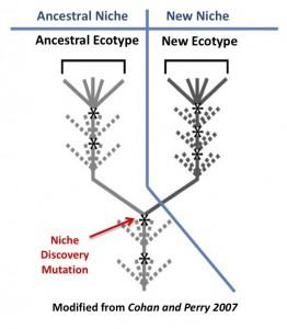 Ecotype Species Concept