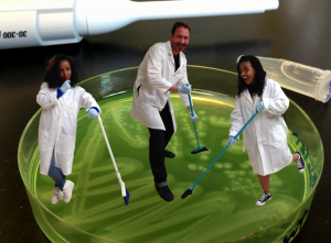 Just another day in the lab. Making plates with Belen Mesele (l) and Helen Abera (r), two of the people working on the project with me. Our wild-type cooperator strains produce beautiful blue-green colonies due to the production of pyocyanin, another behavior regulated by quorum sensing.