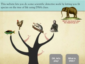 A part of the tutorial for the Tree Thinking game.