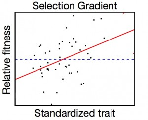 Selection gradient image