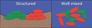 Bacteria living in a spatially structured environment like a seabed (left) are more likely to be related to their neighbors than the same organisms living in open, well-mixed water (right). Classic kin selection can happen in the scenario on the left, but not in the one on the right.