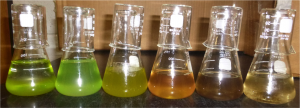 Photo of Litchman stocks to illustrate algal diversity
