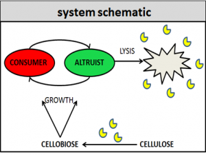 schematic of system