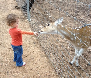 My 2 year old daughter at the Austin Zoo and Animal Sanctuary .