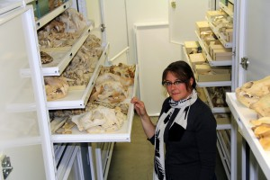 Nikki showing the full range of carnivore skull sizes