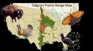 Can evolution help us rebuild native habitats BEACON